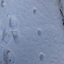 Snow Print 3