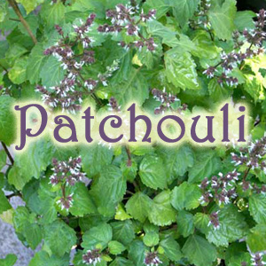 patchouli (1)