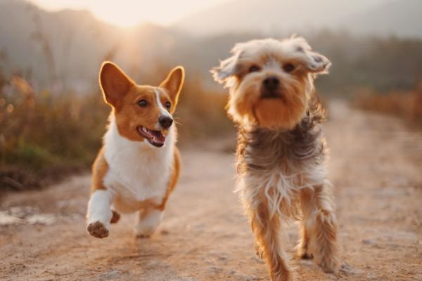 Insurtech amplia serviços para pets com plano completo para cães e gatos / Foto: Alvan Nee / Unsplash Images