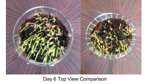 Day 6 Top View