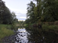 This slow-moving creek near Forest Grove was serene in the early morning.