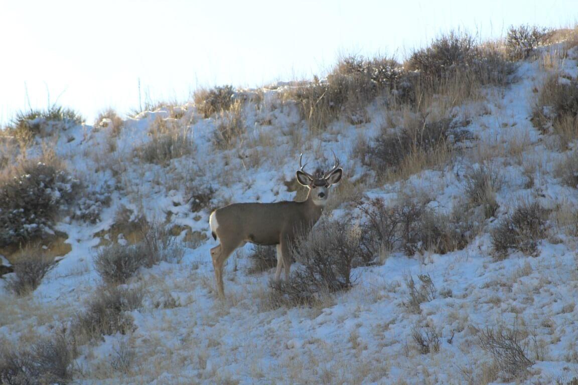 River Hunting Breaks Missouri Elk
