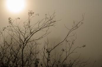 Pitt Meadows Sunrise