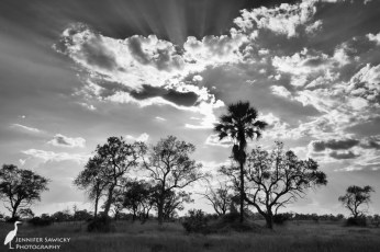 I exposed this shot for the sky, as I wanted to capture the amazing texture of the clouds and the suns rays visible behind the clouds. The trees naturally went into silhouette. Converting this to black and white emphasized the texture far more than the colour photo did. 1/1000sec, f7.1, ISO 110