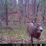 White Rack Mineral Big Buck