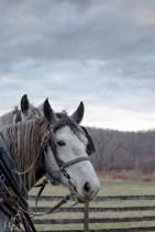 Image of horses