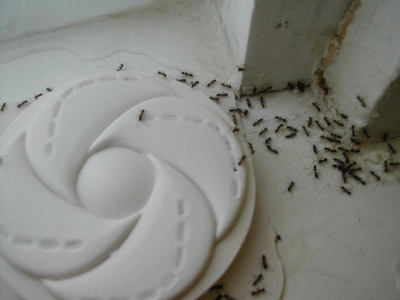 js ant control exterminator las vegas