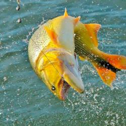 522-pesca-esportiva-1-1-
