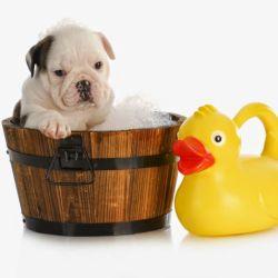 banho-em-cachorro-600x477