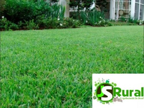 sementes-de-grama-esmeralda-americana-1kg-D_NQ_NP_999776-MLB27856977145_072018-F