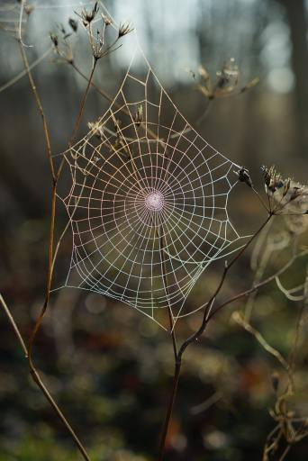 A spider net shows the classic structure of a network
