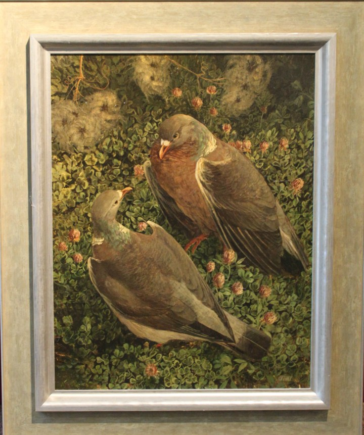 SOLD: Woodpigeons – Ken Turner