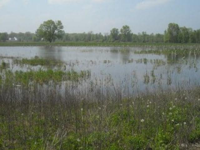 brown-county-resort-rd.-wetland-mitigation-site-5