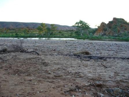 33-10-mile-finke-river-p1000731