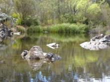 37-shoalhaven-river-bombay-reserve-p1000616