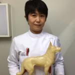 JTCVM国際中獣医学院日本校認定中獣医鍼灸師 a20160105-直井麻維子