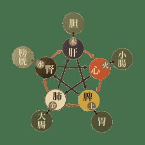 挿入画像02五行図|JTCVM国際中獣医学院日本校
