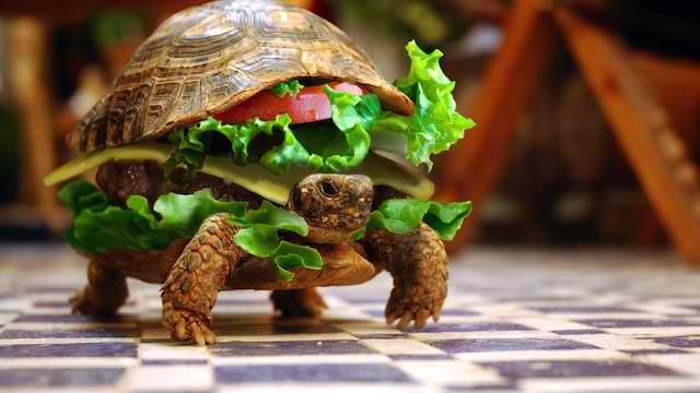 tortue déguisée en hamburger