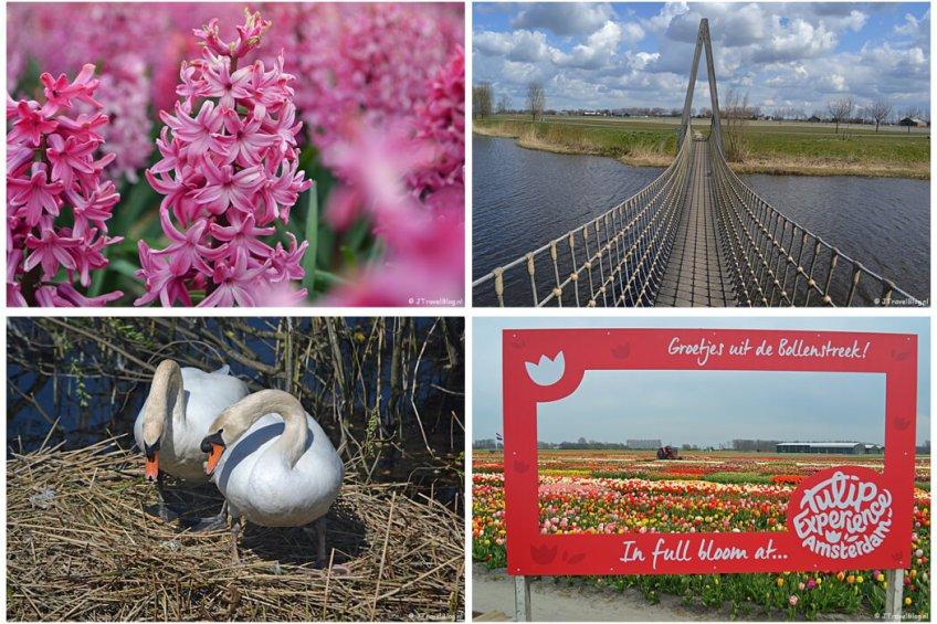 April 2021: Hyacinten in Voorhout, Trage Tocht Vijfhuizen, Amsterdamse Waterleidingduinen en de Bollenstreek