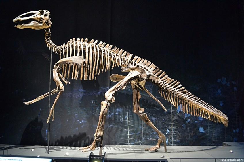 De zaal 'Dinotijd' in Naturalis in Leiden