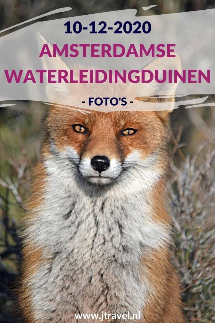 Ik maakte een wandeling in de Amsterdamse Waterleidingduinen. Dit keer zag ik damherten, paddenstoelen en een vos. Mijn foto's zie je hier. Kijk je mee? #awd #vos #paddenstoelen #damhert #wandelen #hiken #natuur #jtravel #jtravelblog #fotos
