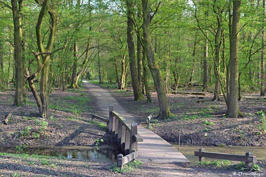 Het Amsterdamse Bos tijdens mijn wandeling langs het groene deel van de Amsterdamse Zuidas