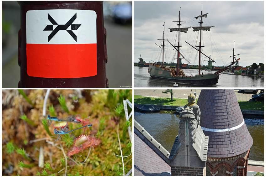 Mijn uitstapjes in juli 2020 : etappe 0 van het Westerborkpad, de Zaanse Schans in Zaandam, een wandeling in de Amsterdamse Waterleidingduinen en 'Wezens van de Koepelkathedraal' in Haarlem