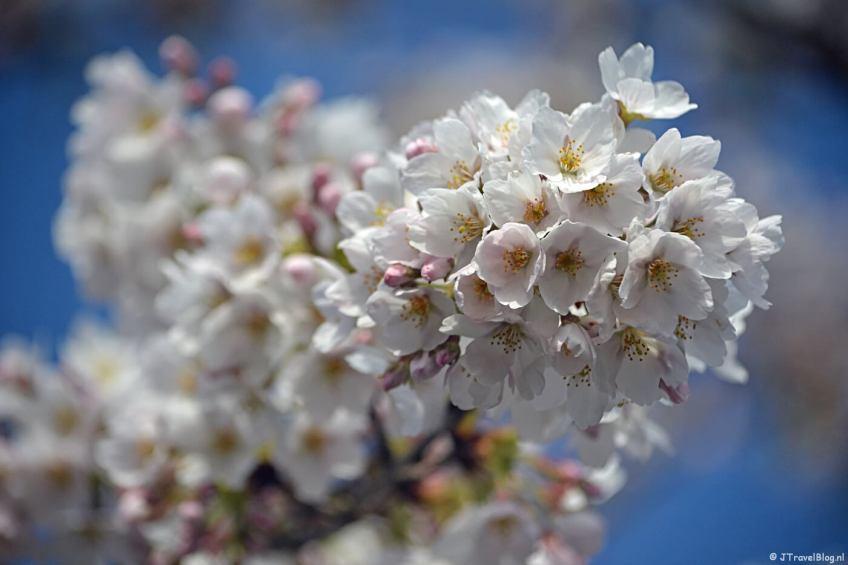 Wandelen en genieten van de lente