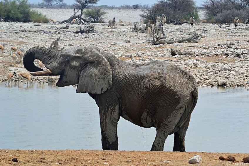 Bijzonder natuurfenomeen in Namibië: Etosha National Park