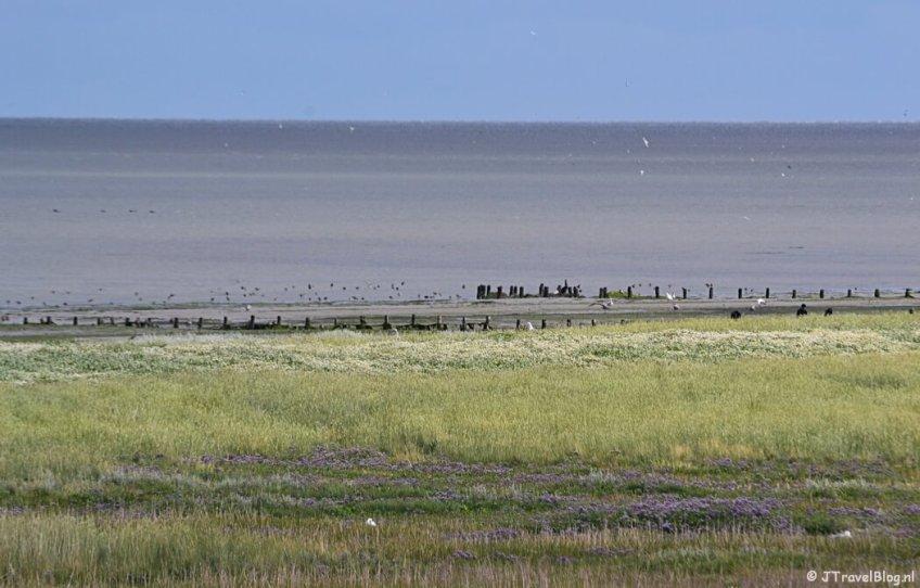 Natuurgebied De Schorren op Texel