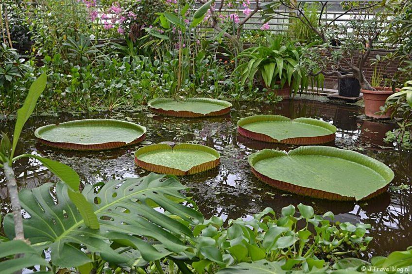 De Hortus Botanicus in Leiden