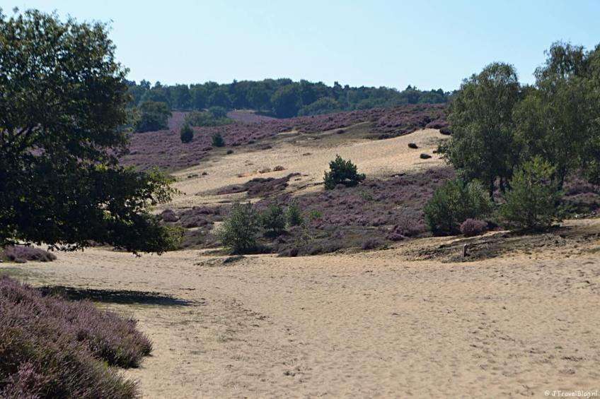 Zand en heide tijdens mijn Trage Tocht wandeling
