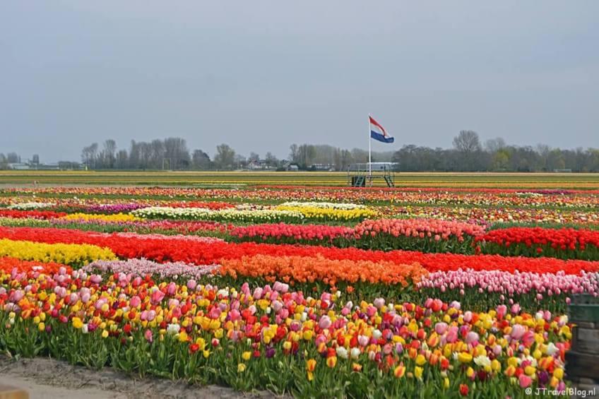 Tulip Experience Amsterdam tijdens de Bollenstreekwandeling rond De Zilk