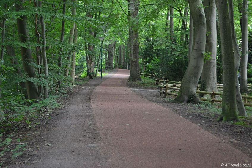 Een verhard bospad tijdens de 7e etappe van het Westerborkpad