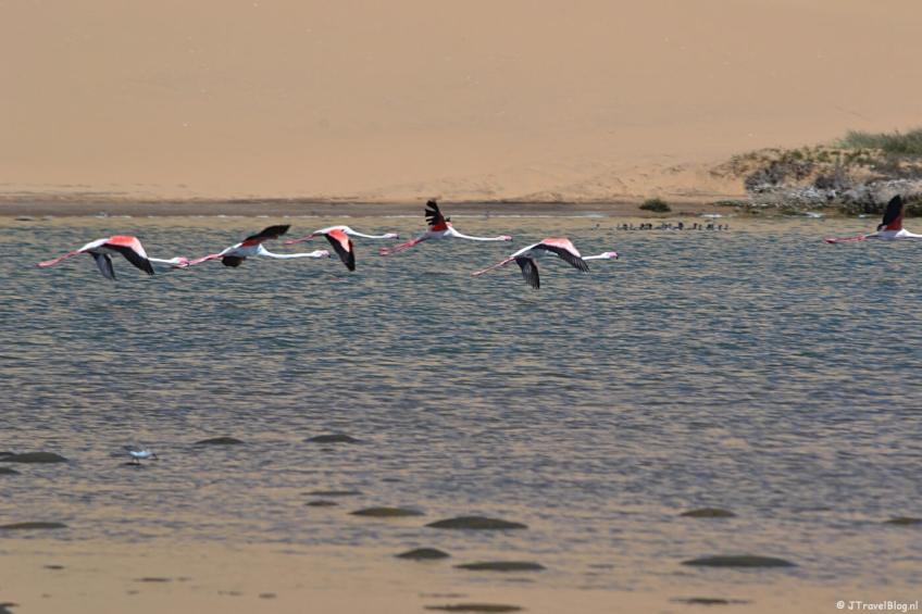 Flamingo's bij de lagune tijdens de Living Desert Tour in de duinen bij Walvis Bay