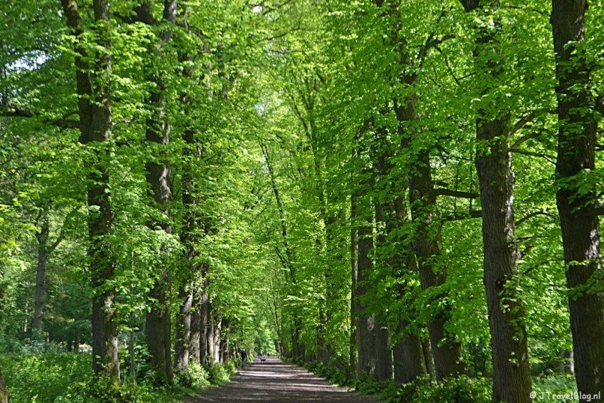 De Adriennelaan in de lente in Wandelbos Groenendaal in Heemstede