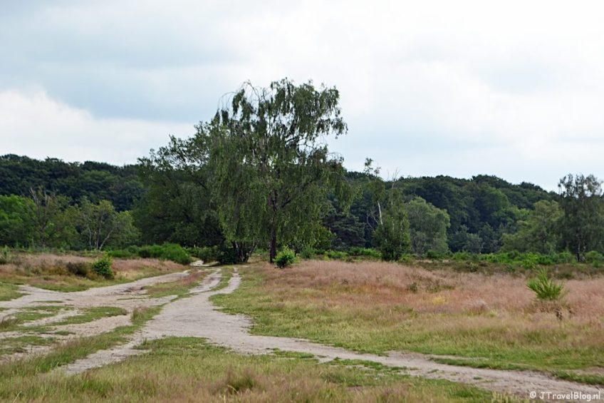 Op de Hoorneboegse Heide tijdens de 6e etappe van het Westerborkpad