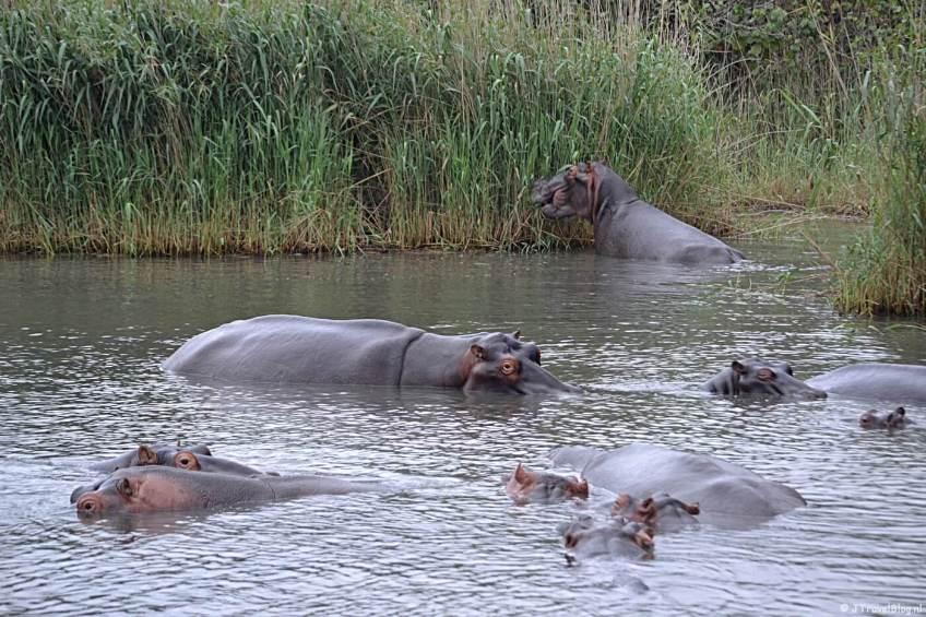 iSimangaliso Wetland Park bij St. Lucia in Zuid-Afrika op de Werelderfgoedlijst van UNESCO