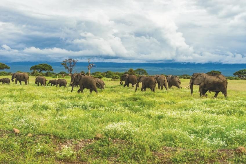 Tanzania Foto: Matthew Cramblett / Unsplash