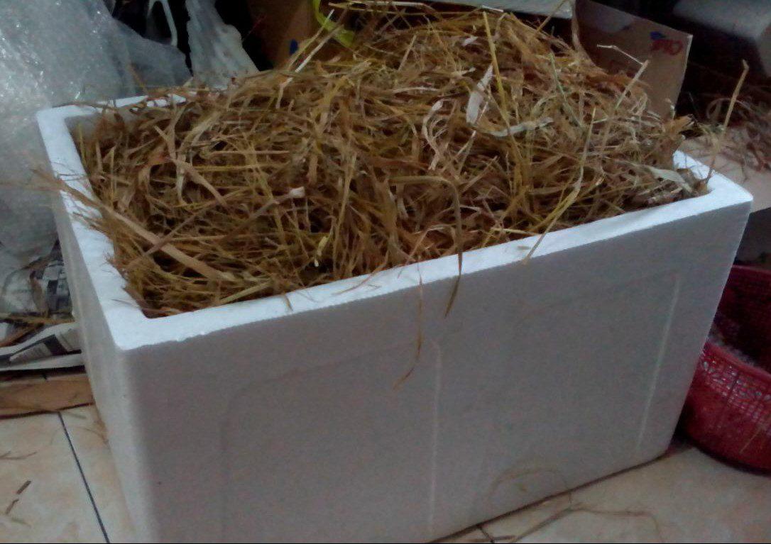 Telur ayam hias di masukan ke Wadah Streofoam yang kuat sehinga meredam goncangan serta kami campur dengan jerami untuk menjaga suhu selama perjalanan