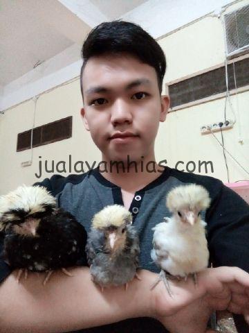 Telur Ayam Polan Sukses di Tetaskan Mas Erwin di Palembang