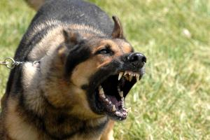 Serangan Anjing