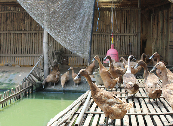 Kolam air untuk bebek