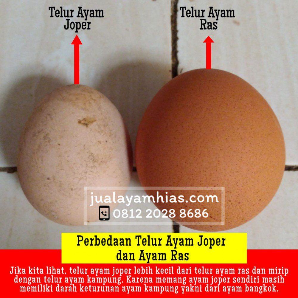 Perbedaan telur ayam joper dengan telur ayam ras