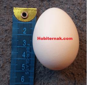 Telur Ayam Batik Itali Image