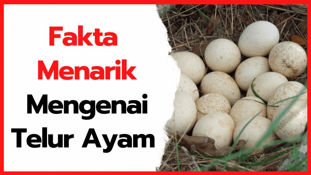 Fakta Menarik Mengenai Telur Ayam yang Belum Banyak di Ketahui