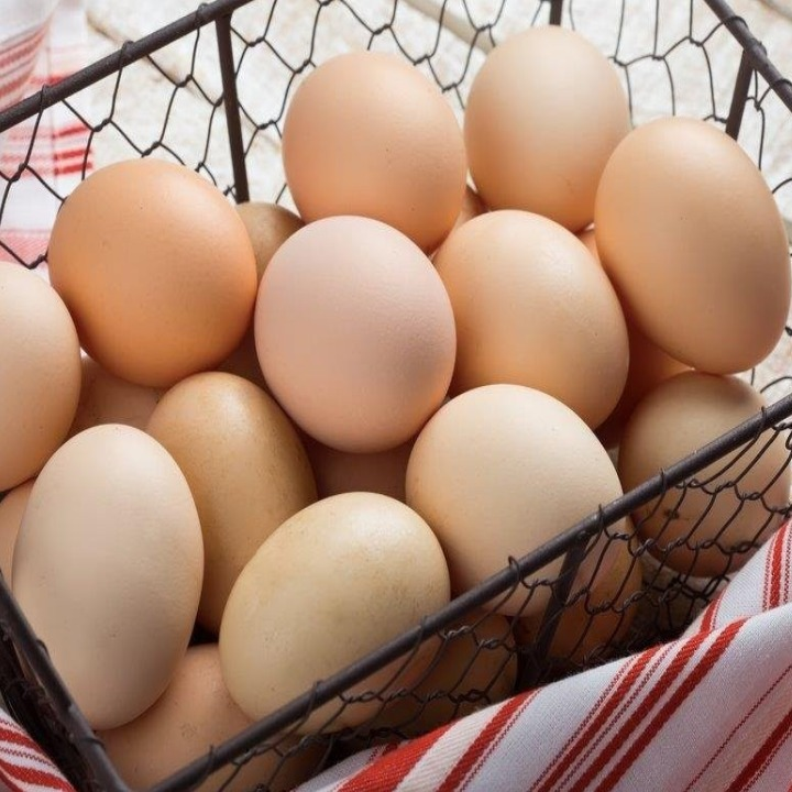 Telur Tetas