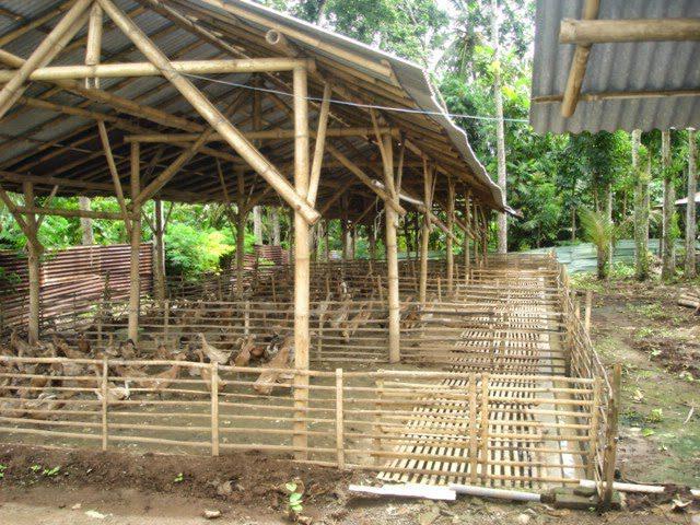 Kandang Tipe Postal Beternak Bebek Peking Jual Ayam Hias HP : 08564 77 23 888 | BERKUALITAS DAN TERPERCAYA Beternak Bebek Peking Tips Beternak Bebek Peking untuk Pemula
