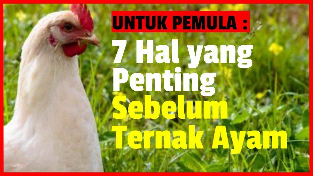 UNTUK PEMULA - 7 Hal yang Penting Anda Ketahui Sebelum Ternak Ayam