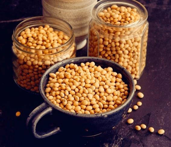 Kacang kedelai memiliki kandungan vitamin yang banyak, jadi sangat cocok jika di gunakan untuk pakan burung merpati | Kacang Kedelai